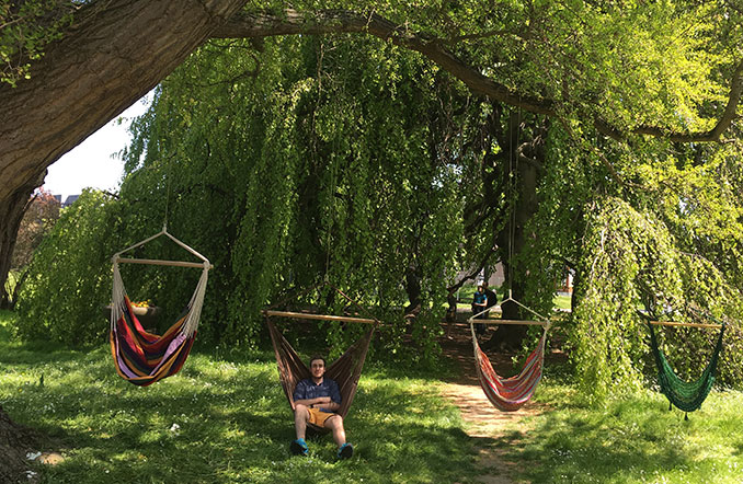 Four hammock chairs in the park